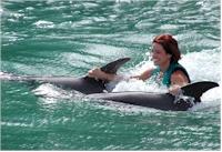 falmouth dolphins tours swim